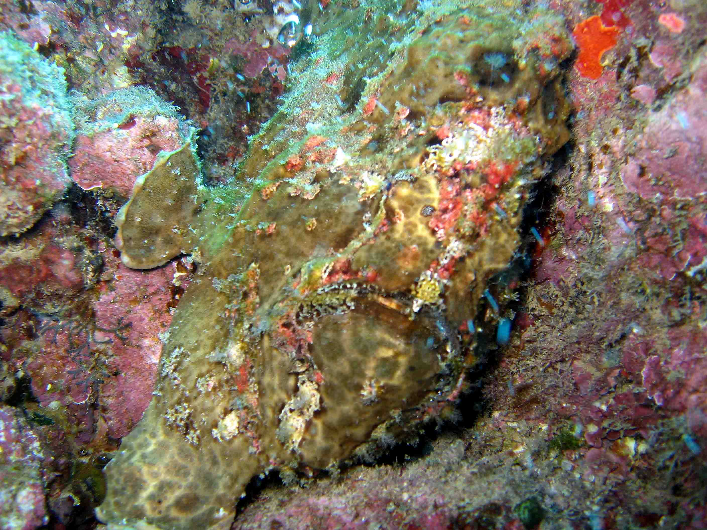 Photo Ed took of a frogfish